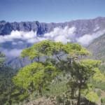 La Caldera de Taburiente - El Paso - La Palma - Islas Canarias - Saltodelpastorcanario.org.