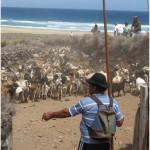 Juan Pérez, Comisionado de los pastores de Jandía - Pájara - Fuerteventura - F.S.P.C. (2011).