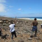 Apañada de Cofete - Pájara - Fuerteventura (2011).
