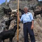 El cabrero de Taborno, Álvaro Ravelo 'Alvarito' con su Lanza y ganado - Macizo de Anaga - Santa Cruz de Tenerife - Foto de Miguel Rodríguez - F.S.P.C. - Islas Canarias (2007).