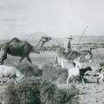 Imágenes del Siglo XX en la Isla de Fuerteventura - Federación de Salto del Pastor Canario (2001-2021).